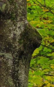 Waldspiele_Kletterspiele