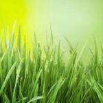 Der perfekte Rasen für die Spielwiese
