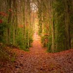 Barfußweg im Wald