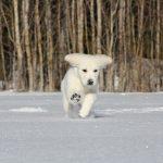Natur entdecken im Winter